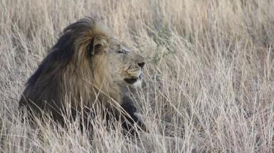 Madikwe o safari onde é (quase) garantido ver o big five.