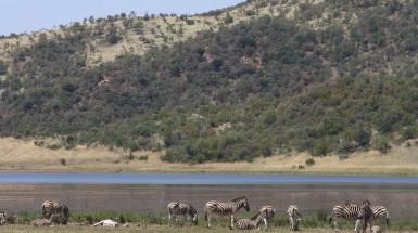 Pilanesberg, safari a somente 2 horas de Joanesburgo
