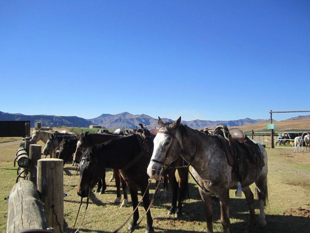 horse riding drakensberg